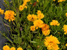 Beautiful perennials, that will flower year after year.