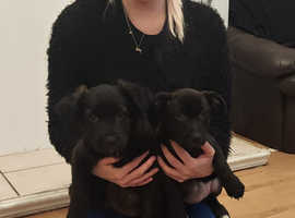 Two female Puppies ready for their forever homes.