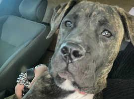7 month puppy