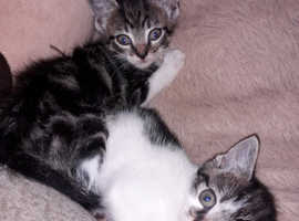 Kittens ready now