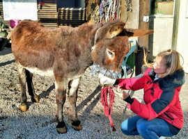 Super friendly donkey