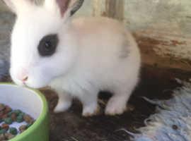 Very  pretty baby rabbits