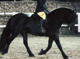 **Full/Assisted  Livery now available at Lakewall Show Team**