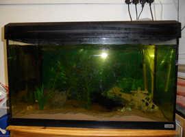 Fluval 125 litre fish tank.