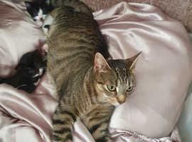 Black white kittens