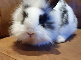 Beautiful fluffy rabbit
