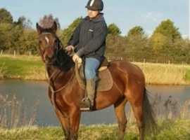 Very pretty allrounder mare