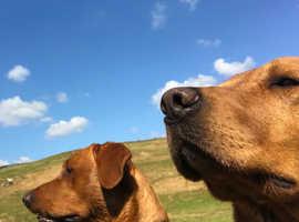 Best friends dog walking & cat care