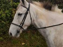 sweet mare looking for her forever home