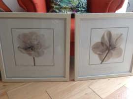 2 Ikea Rose framed prints