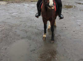 Stunning ride and drive mare