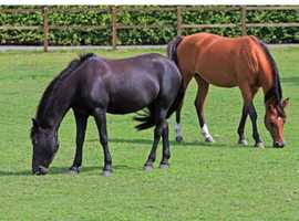 Grazing to rent DIY or basic ASSISTED livery. Rural location near Wem Shropshire