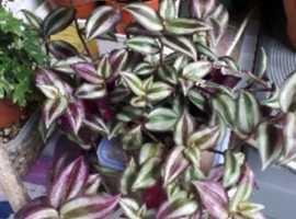 reptile plants
