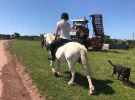Super Fun Pony For Sale
