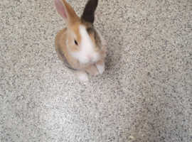 Gorgeous baby rabbits. Looking for loving forever home. Ready to go now