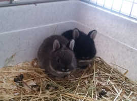 Two lovely bunnies