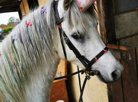 Adorable friendly pony