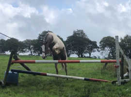 Kind Showjumping Potential