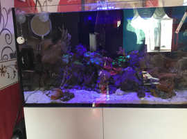Lovely marine fish tank with seahorses