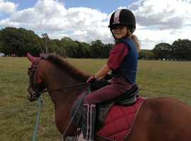 12.2 dartmoor hill pony / project
