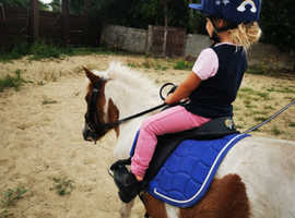 Safe experienced pony wanted for loan
