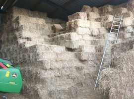 Small hay bales. Hay/haylage round bales