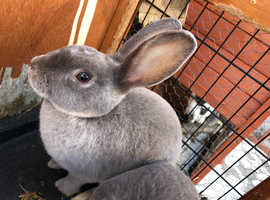 4 month old bunny's for sale