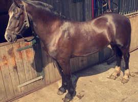Stunning sec D mare.