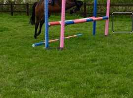 Eye Catching Mare for Sale