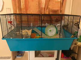 Female Syrian Hamster *PENDING*