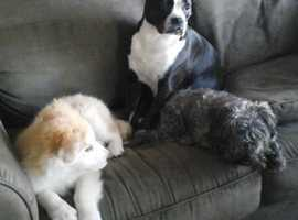 IN-HOME DOG BOARDING and DOGGIE DAY CARE