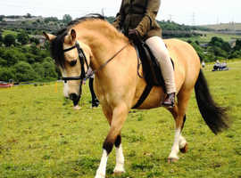 pony available for PART LOAN ONLY