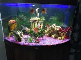 Fish tank 230L with setup