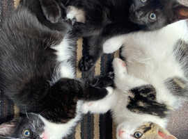 3 Little kittens looking for a forever home.