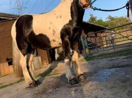 WANTED horse part/full loan