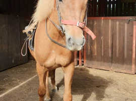 11.2 four year old pony reduced offers invited
