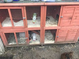 3 male bonded guinea pigs and cage