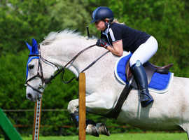 Stunning quirky warmblood mare for loan