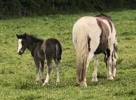 Fantastic filly foal
