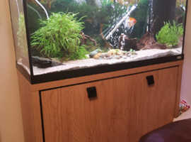 Fluvial Roma fish tank 200L