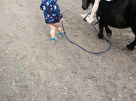 Kids riding pony Black beauty