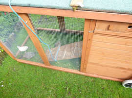 Quail with lovely home