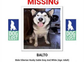 Balto is missing