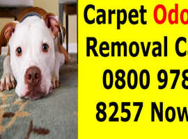Need Carpet Odour Removal Service? We Do It For You - Pet Odour Eliminator