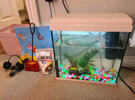 4 platy fish and 2 shrimp for sale with or without tank
