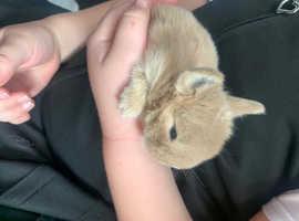 12 day old baby mini loop