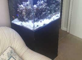 Full marine tank setup