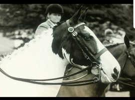 stunning mare
