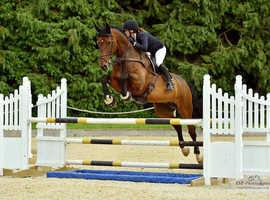 Big flashy horse seeks perfect new home