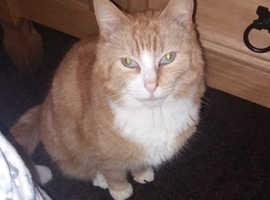 My Missing cat fudge